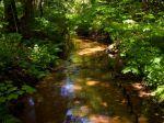 Miniatura zdjęcia: Rzeka Gryżynka